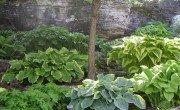 Door County Garden - CMC